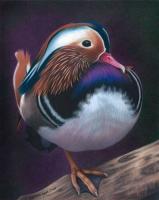 Bird_CPClassics