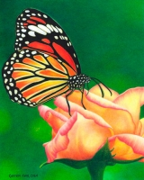 Butterfly_CPClassics
