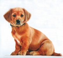 4-WF-Puppy-CPBasics