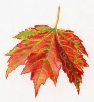 WF-Leaf-web