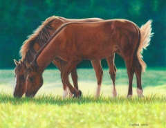 Horses-Grazing-web