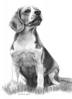 3-Dogs_Beagle