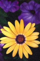 1-Summer-in-Bloom