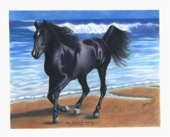 Arabian-Horse-wp