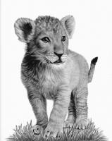 1-Lion Cub