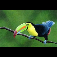 3-CS17.Toucan.FIN-SQ