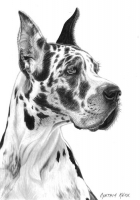 2-Dogs_Great-Dane