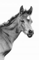 2-Foal